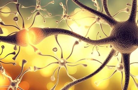 דלקת המוח כסמן לאוטיזים
